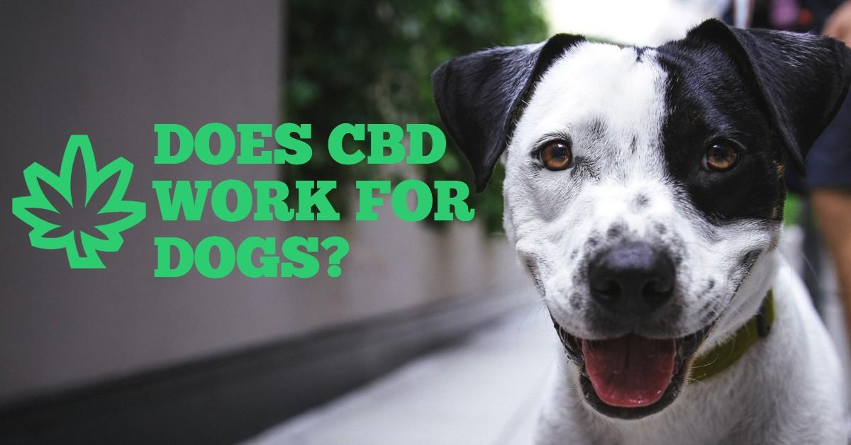 Smiling dog next to words 'Does CBD Work for Dogs?'