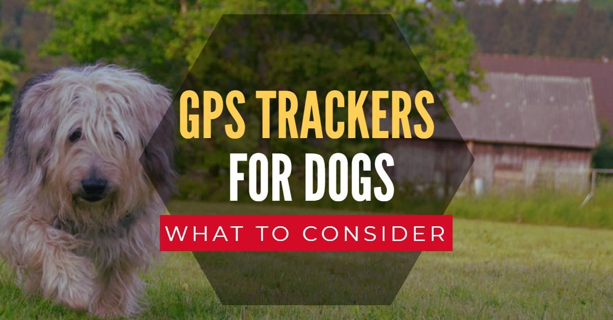 Dog running near barn with text 'GPS trackers for dogs'