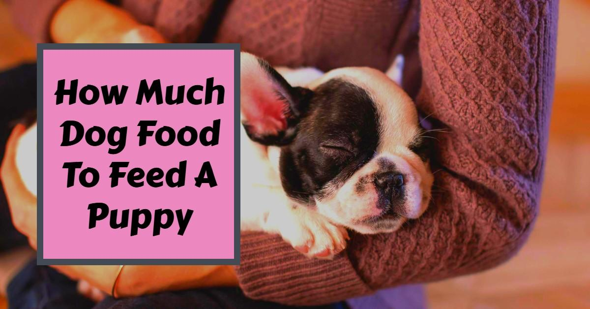 How Much Dog Food To Feed A Puppy