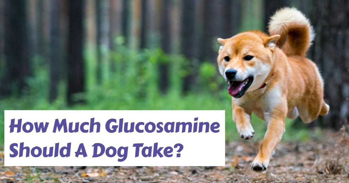 "Text stating ""How Much Glucosamine Should A Dog Take?"" next to running dog"