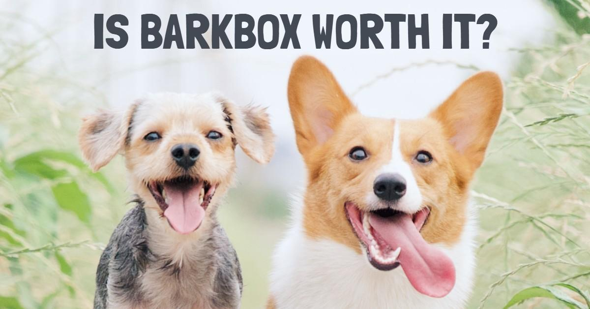 Text stating 'Is BarkBox Worth It?' with two happy dogs