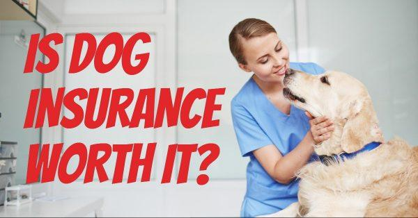 Is Dog Insurance Worth It?