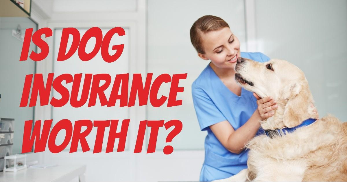 Text stating 'Is Dog Insurance Worth It?' next to vet holding dog