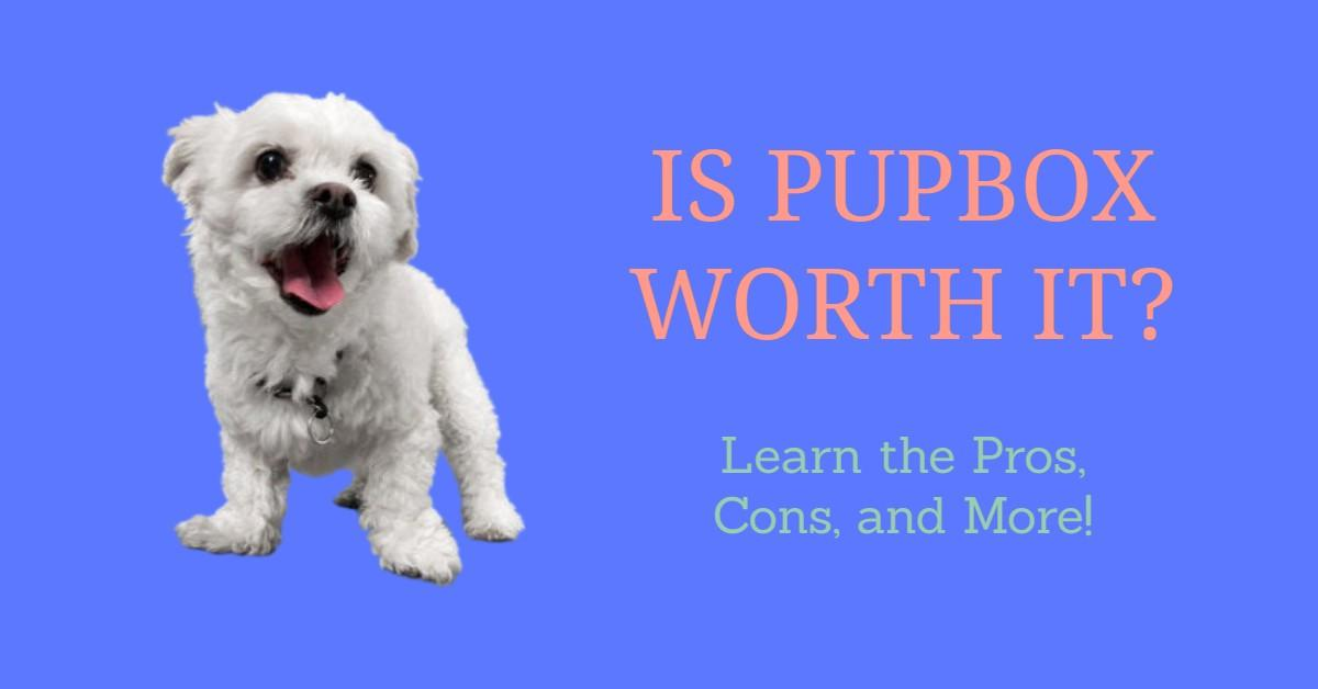 Smiling Maltese next to title of article 'Is PupBox Worth It?'