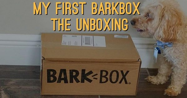 My First BarkBox: The Unboxing