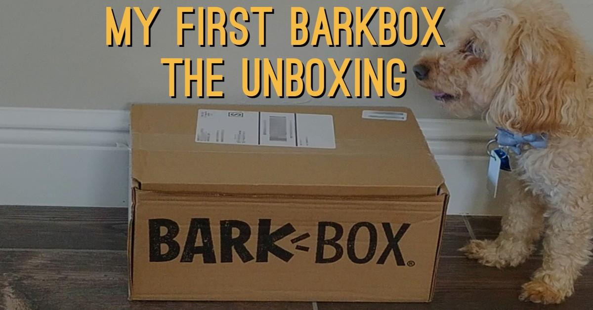 Photo of my dog with his first BarkBox for my unboxing article.
