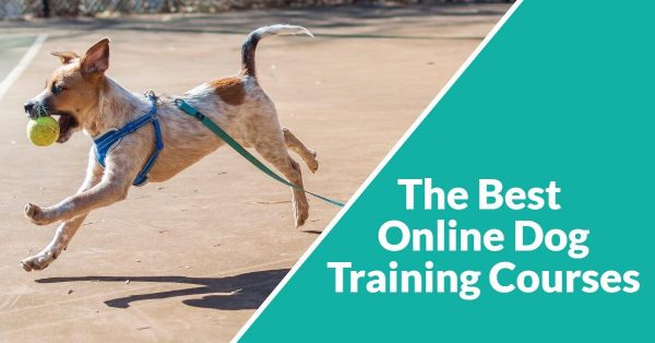 The Best Online Dog Training Courses