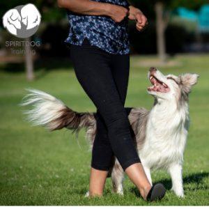 Spiritdog training
