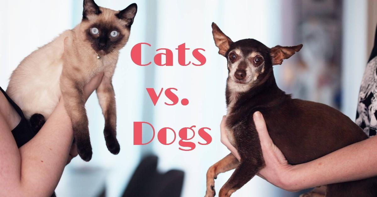 A cat being held up next to a dog