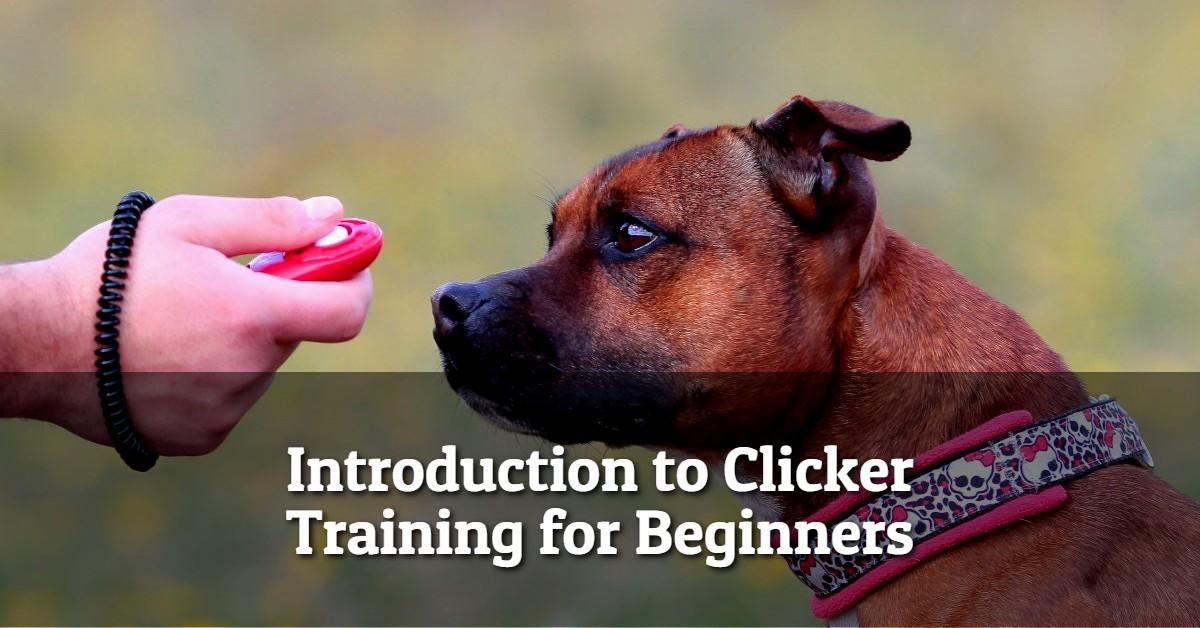 person holding clicker in front of dog