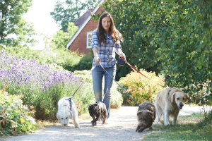 Woman dog walker with 4 dogs on a path
