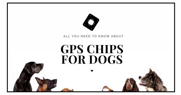 GPS Chips for Dogs: Do They Exist and Alternatives?