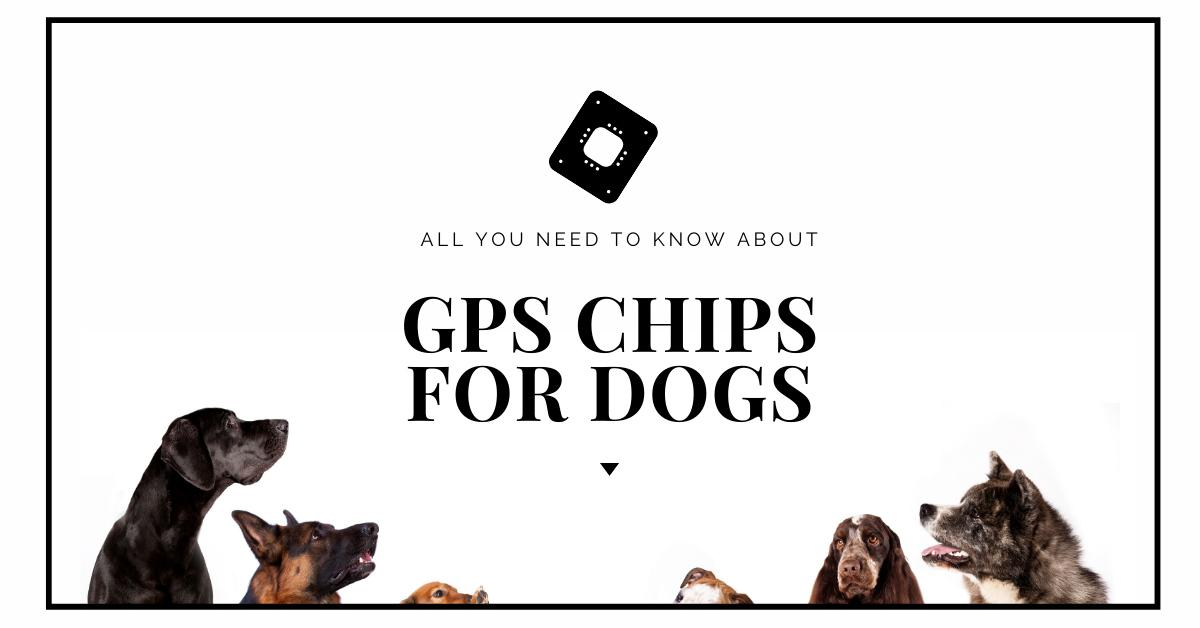 Gps Chips for Dogs