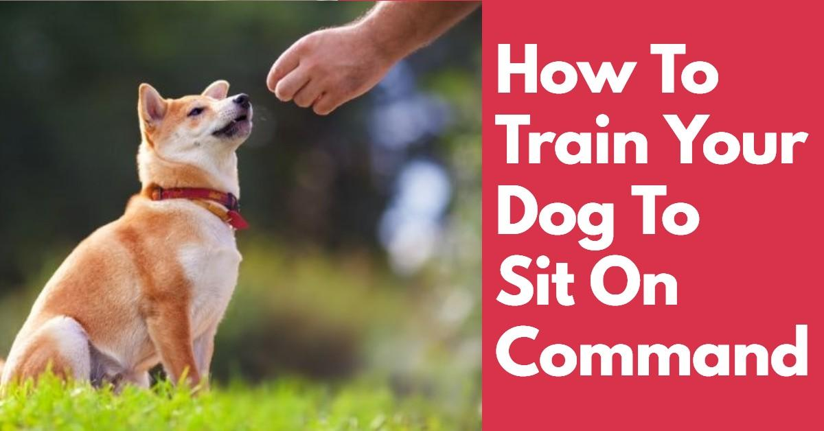 Dog sitting in order to get a treat when learning how to sit on command
