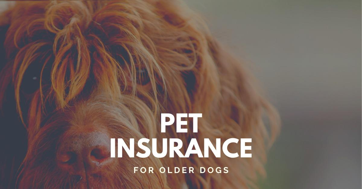 Text stating 'Pet Insurance for older dogs' with older dog in background