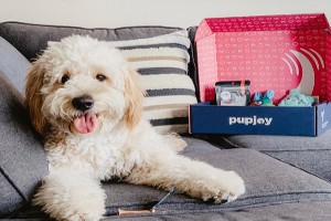 Dog on couch next to PupJoy opened box with treats