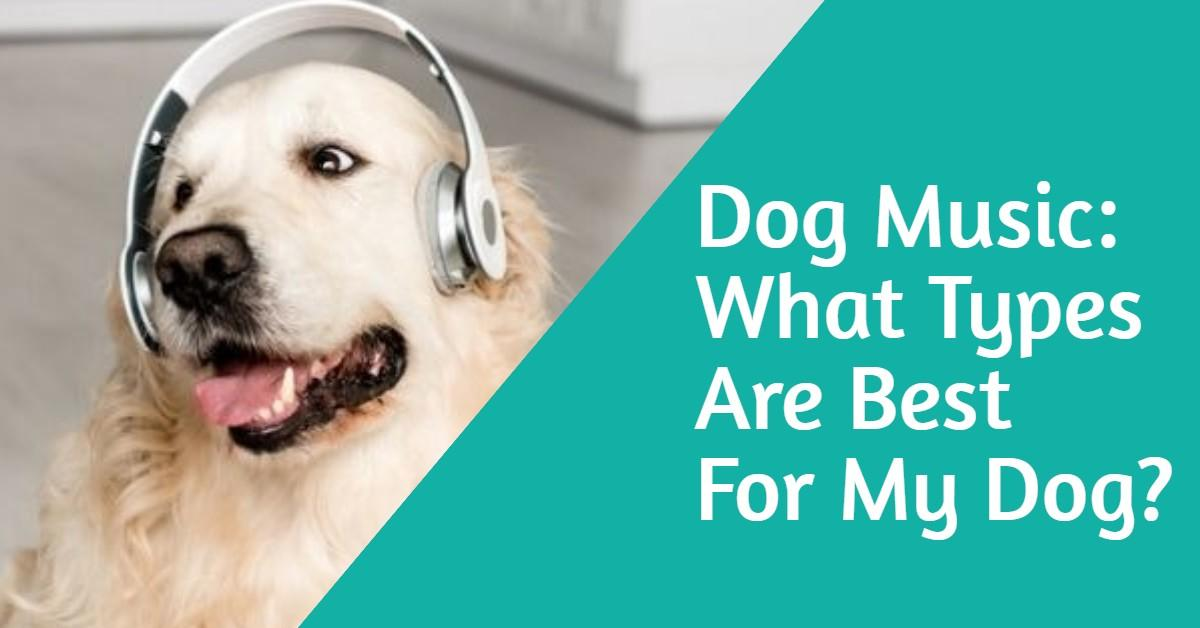 best types of dog music