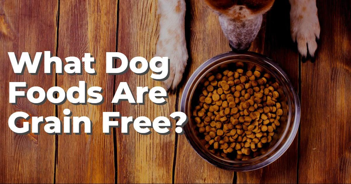 Text stating 'What dog foods are grain free?' with dog staring at dog bowl