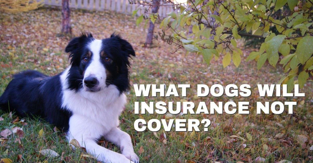 what dogs will insurance not cover