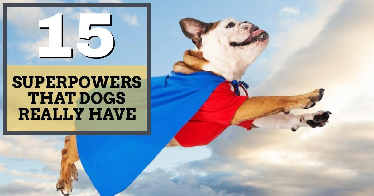 15 Superpowers that Dogs Really Have