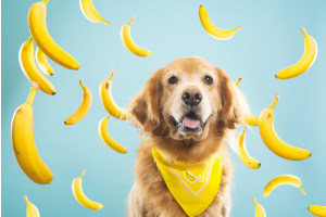 benefits of bananas for dogs