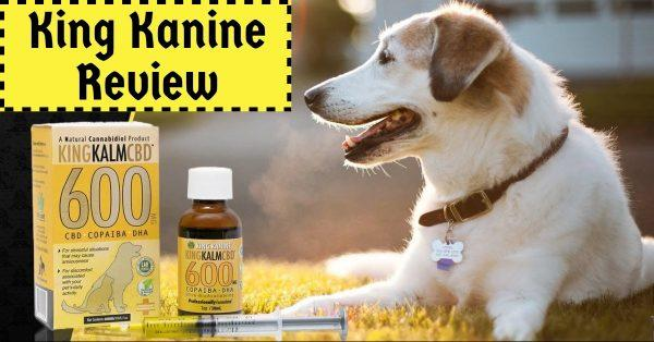 King Kanine Review: The Best CBD Oil For Your Pet?