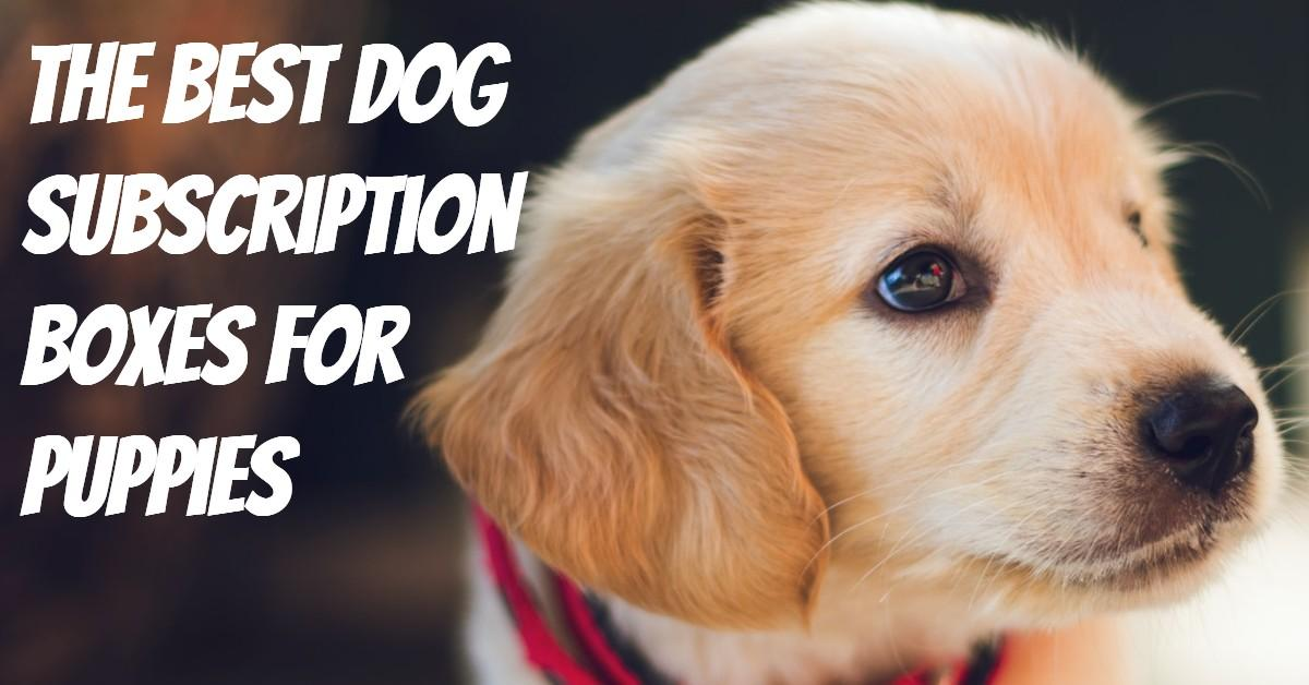 Best Dog Subscription Boxes for Puppies