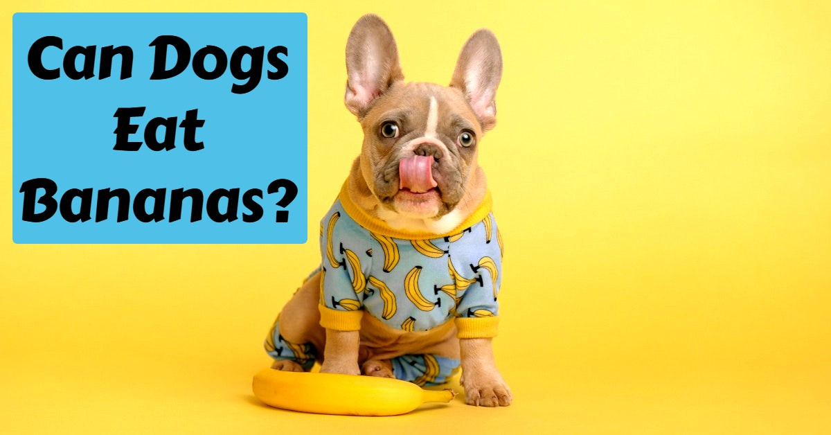 Can dogs eat bananas