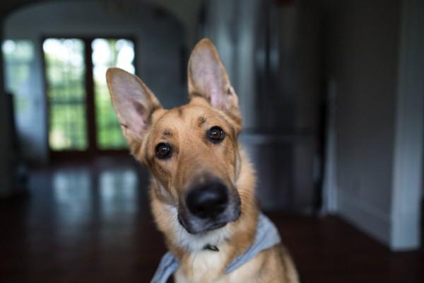 Dogs can hear sounds that humans cannot