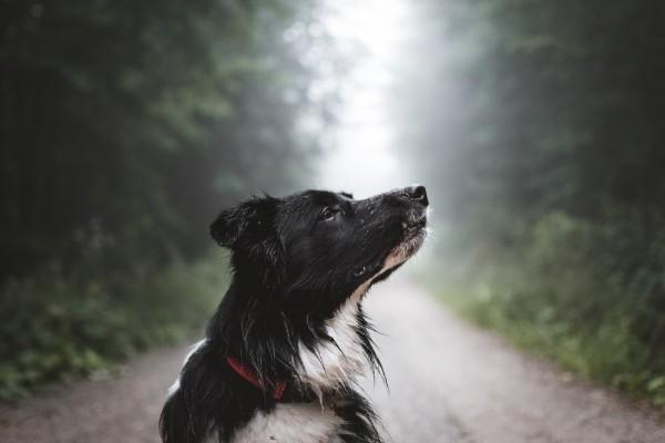 Dogs can detect air currents