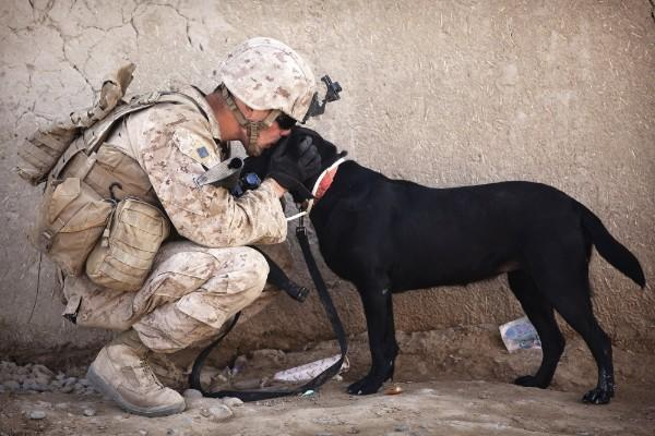 Dogs can detect explosives