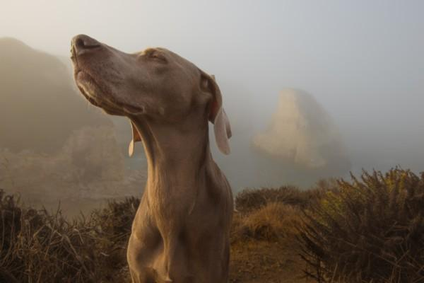 Dogs can detect health problems
