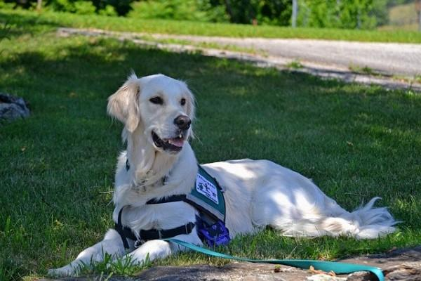 Dogs can detect seizures