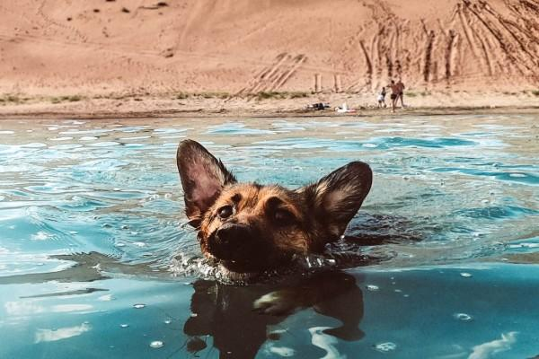 Dogs can smell underwater