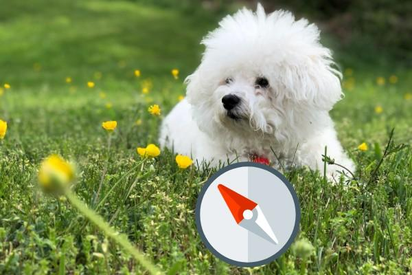 Dogs can sense earth's magnetic field