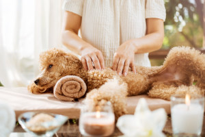 Holistic pet health
