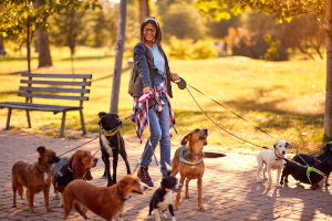 Online pet care marketplaces
