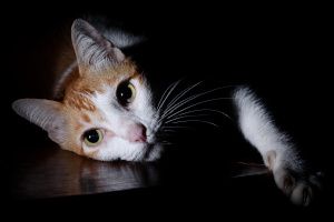 pet portrait photography