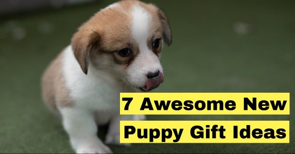 7 Awesome New Puppy Gift Ideas