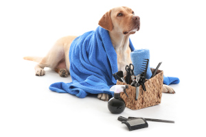 dog being groomed at home with dog grooming kit