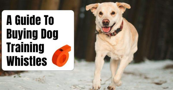 Buying A Dog Training Whistle? Read This Guide Beforehand!