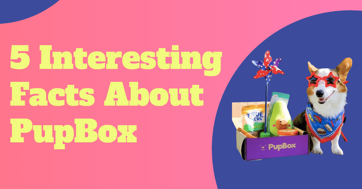5 Interesting Facts about PupBox words with PupBox open box and dog with costume