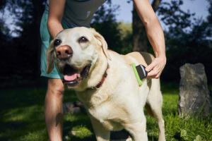 owner brushing dog