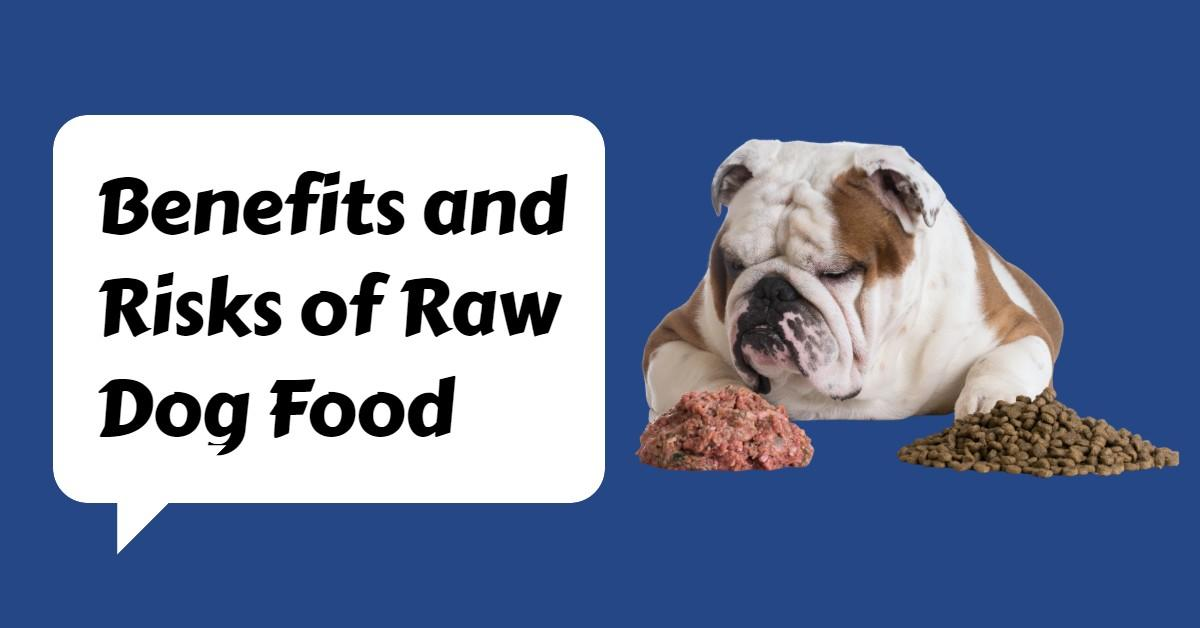 Benefits and Risks of Raw Dog Food
