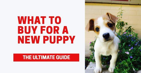 What To Buy For A New Puppy: The Ultimate Guide
