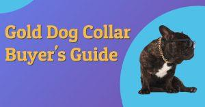 The Gold Dog Collar Buyer's Guide