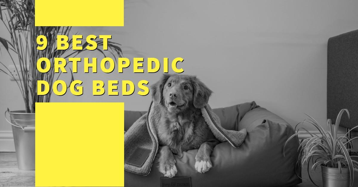 Best Orthopedic Dog Beds with dog on bed in background