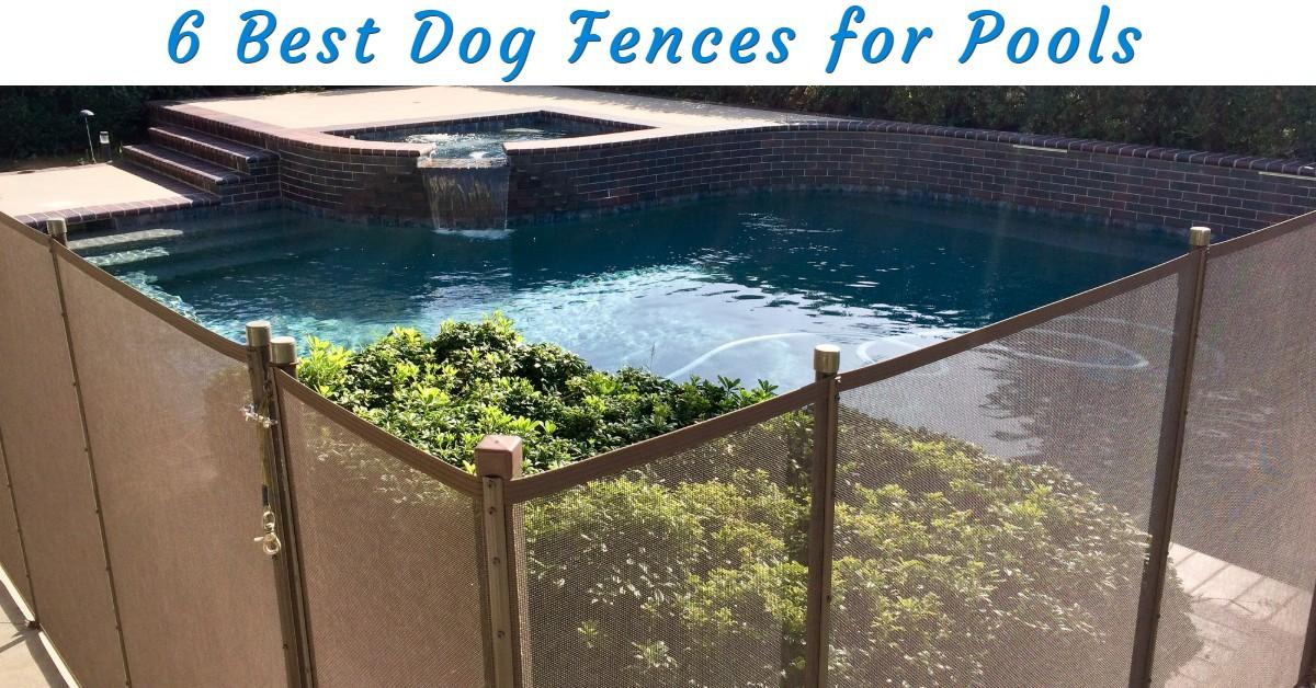 Best Dog Fence for Pools