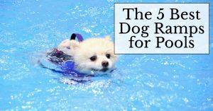 The 5 Best Dog Ramps for Pools and Buyer's Guide