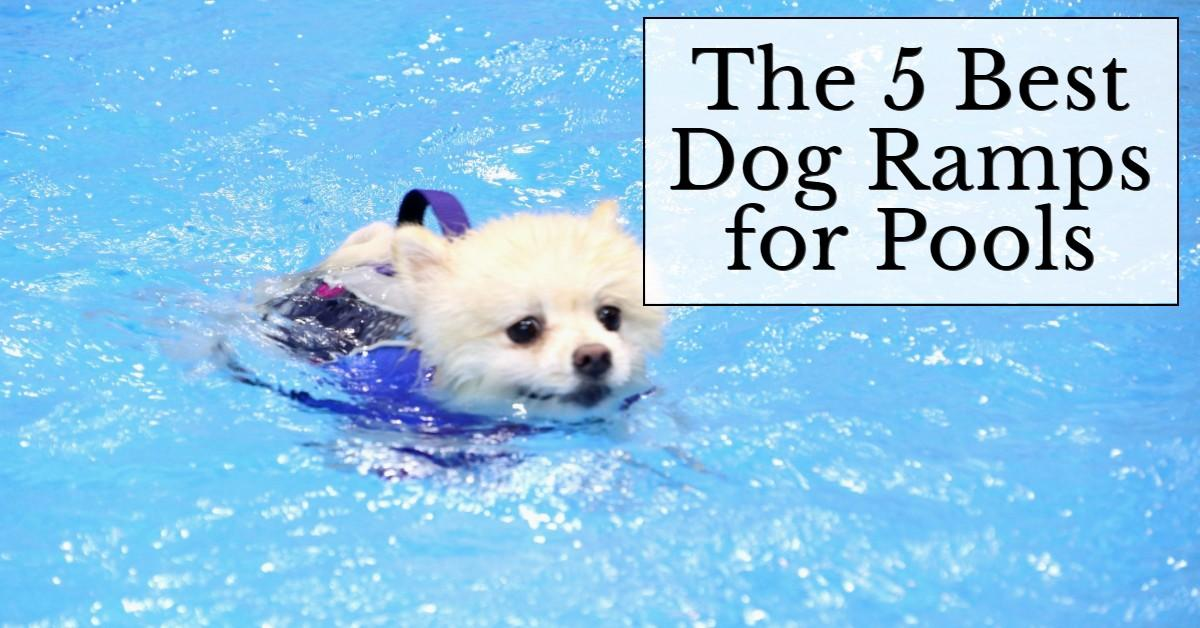 best dog ramps for pools